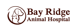 Bay Ridge Animal Hospital